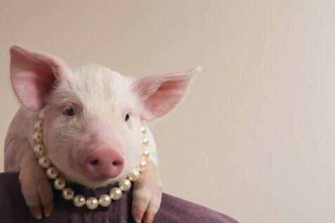 Pink Pig in Pearls