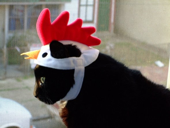 draft_lens4246172module37805832photo_1244101957Cat_wearing_chicken_head