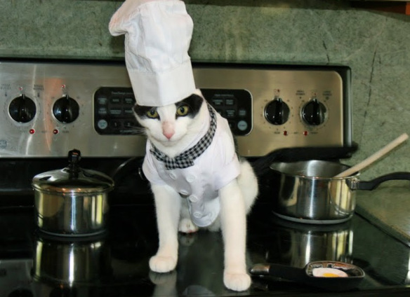 cats-cooking-2
